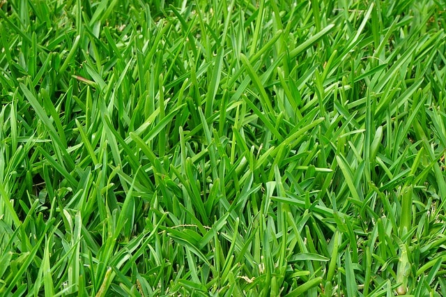 5 Tips to Protect Your Property's Lawn During the Branson Missouri Winter